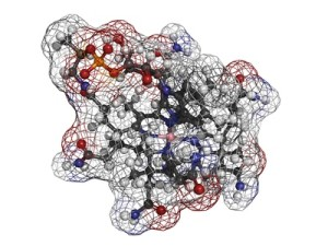 vitamina-b12-bula