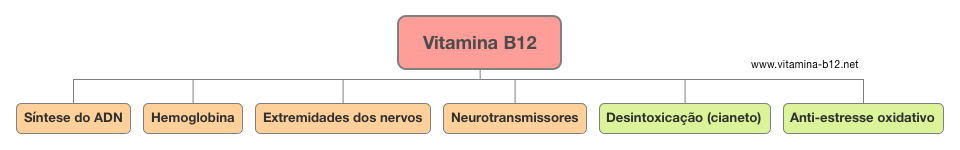 papel-vitamina-b12