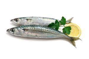 peixe-vitaminab12